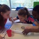 (Foto: basisschool de fontein Dordrecht)