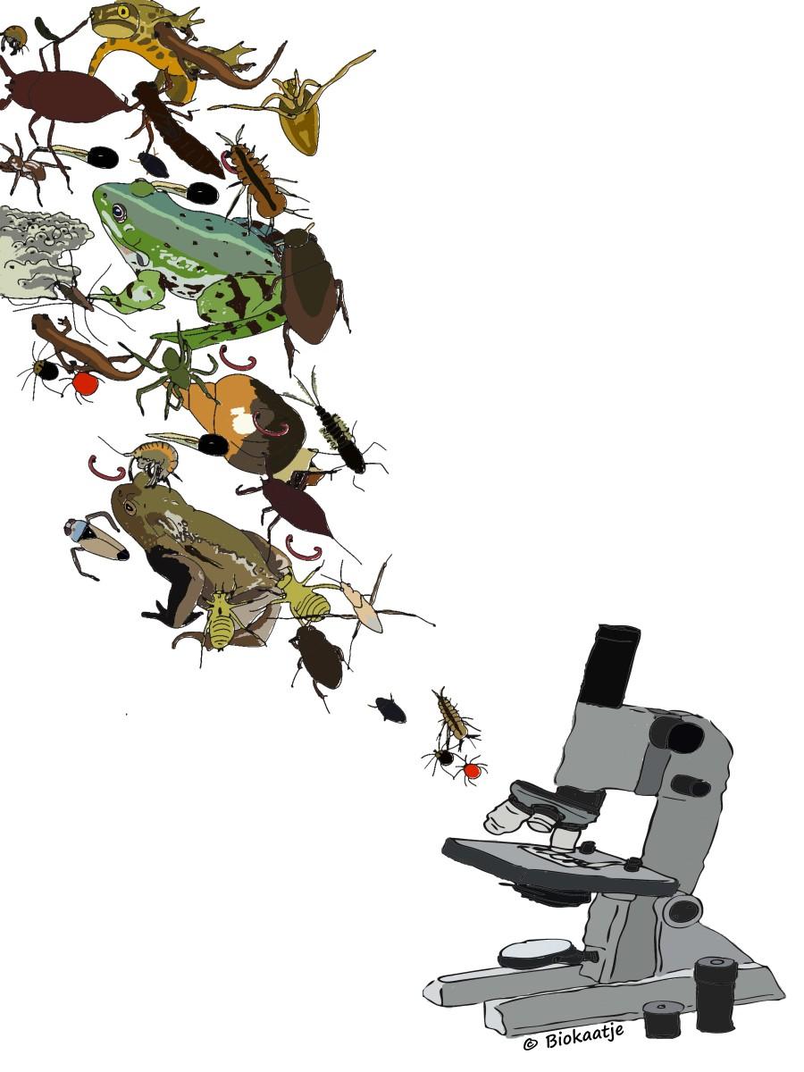 microscoop kleur sloot